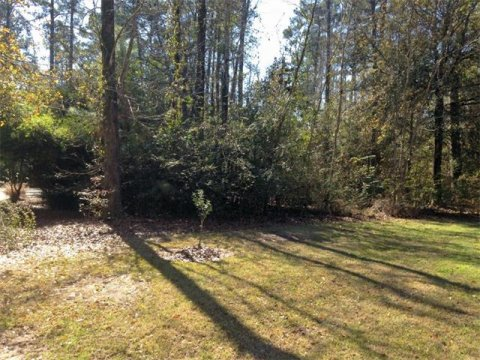Magnolia Banks Lot 73